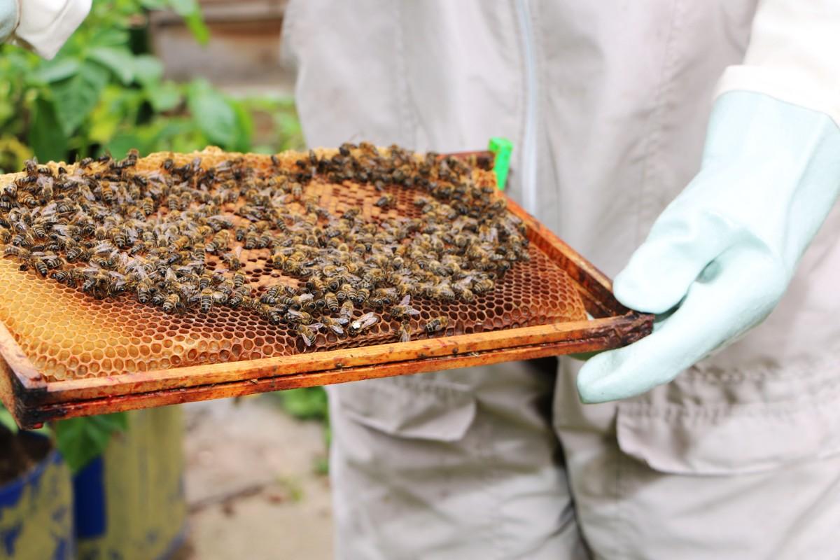 Beekeeper John Gale 2.jpg