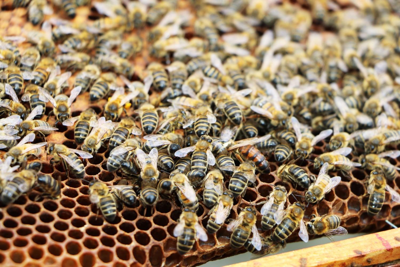 Opus Restaurant, Saving Bees in Birmingham, Opus in Conversation, Urban Beekeeping